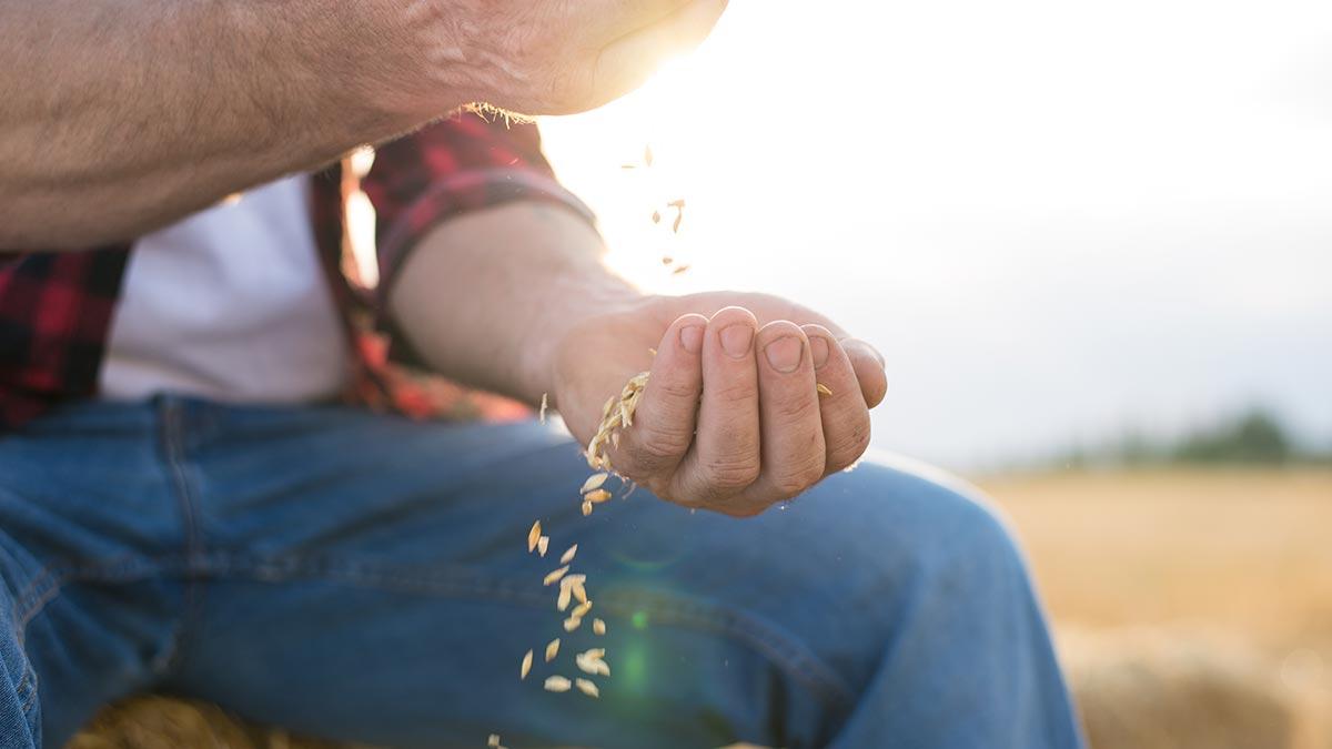 oats-ingredient-spotlight