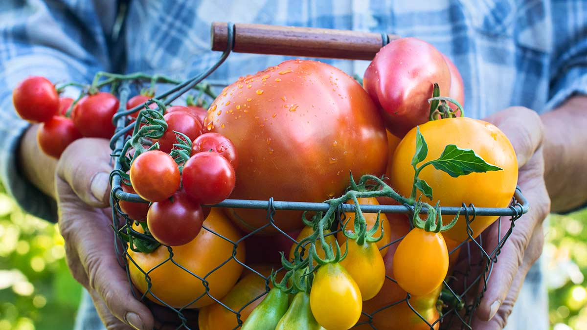 ways-to-enjoy-tomatoes