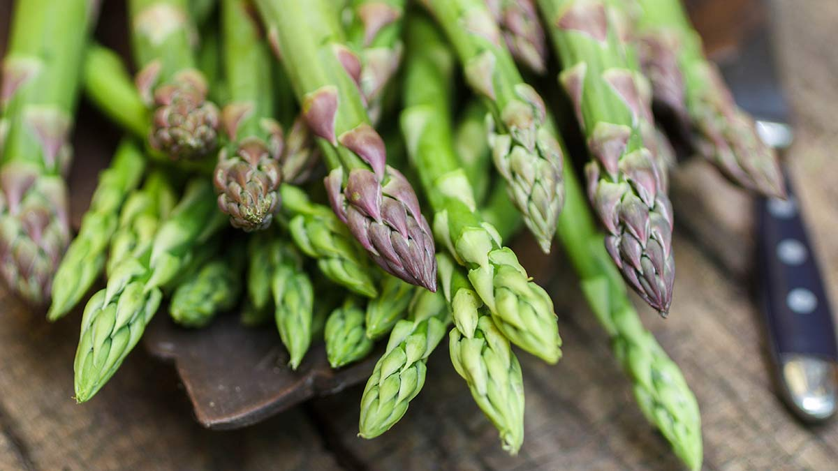 how-asparagus-grows