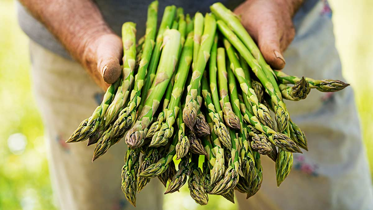 how-to-pick-asparagus