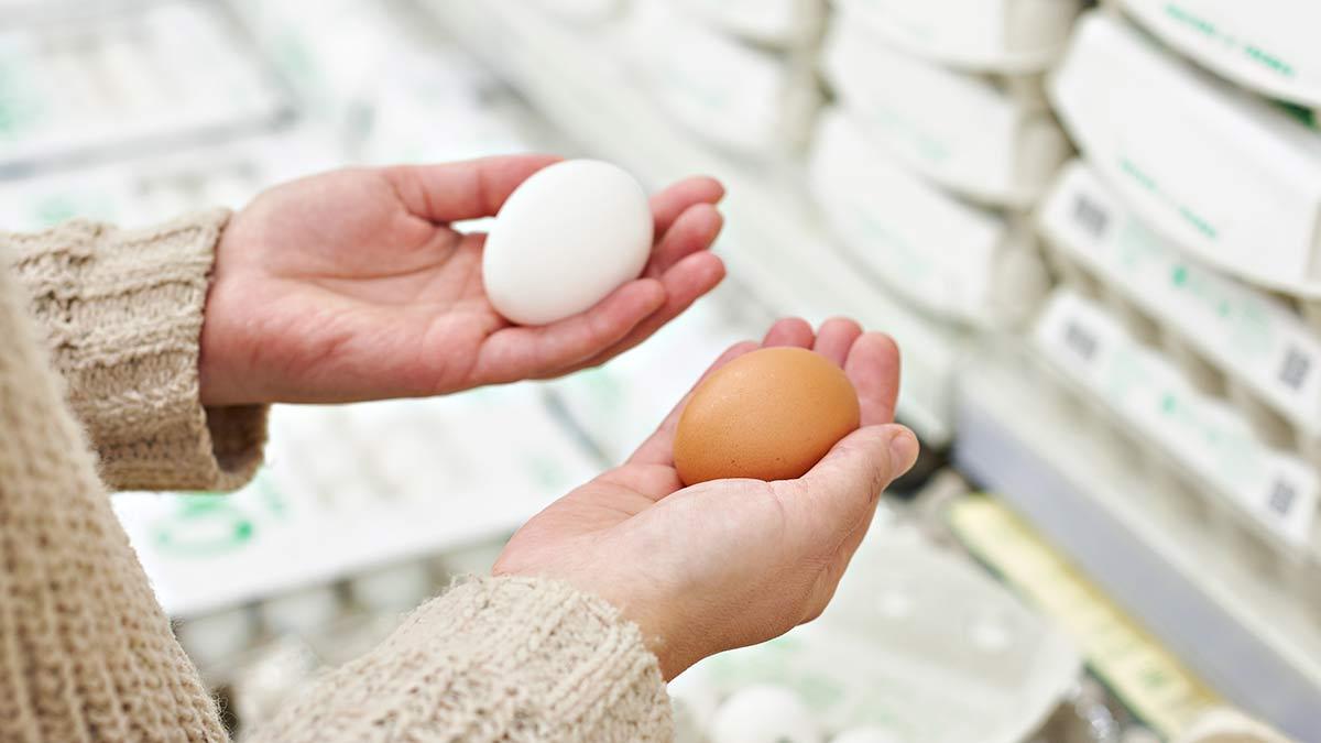 eggs-are-protein