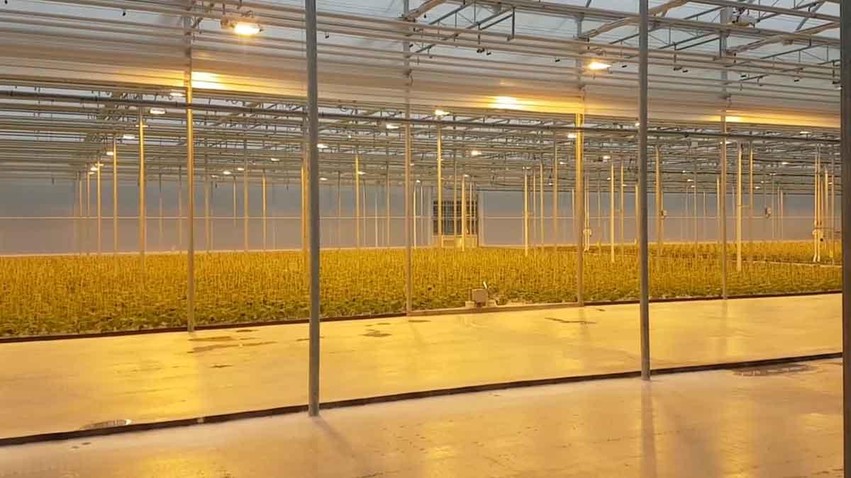 cucumber-seedling-plants