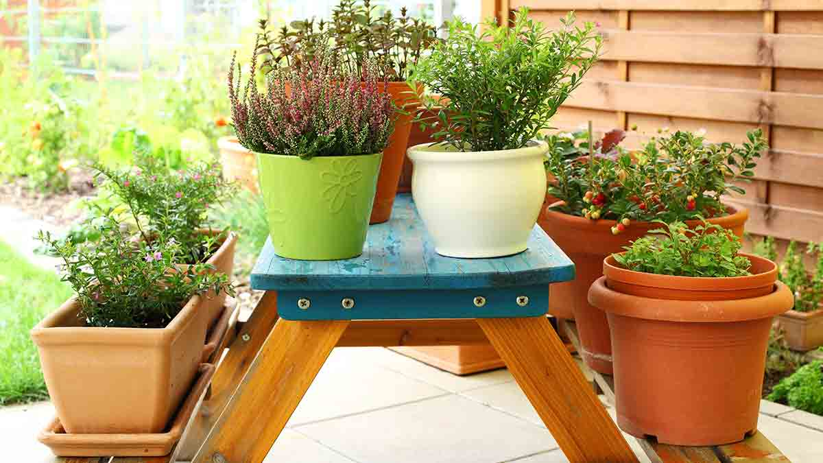 flowers-planted-in-pots