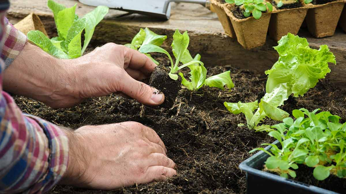 planting-vegetables-in-garden