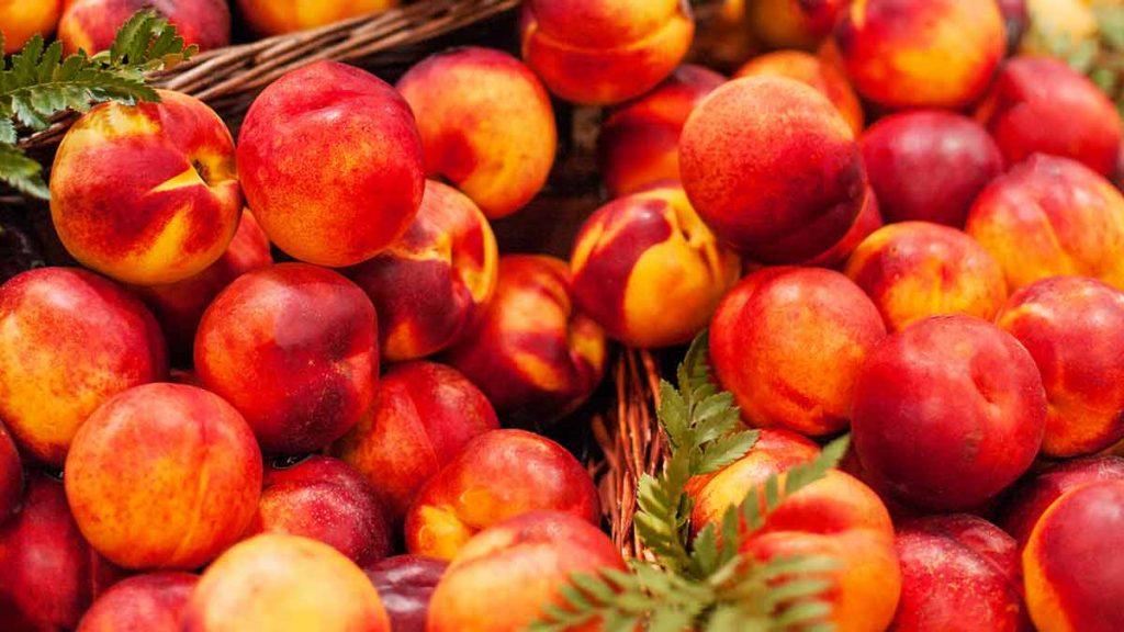 buying nectarines