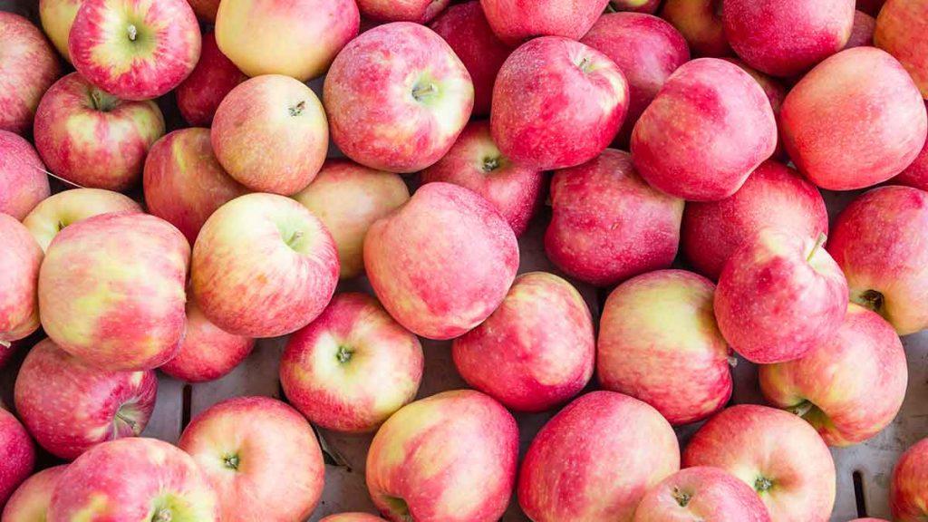 honey crisp apple
