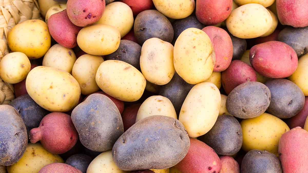 potatoes multicolored