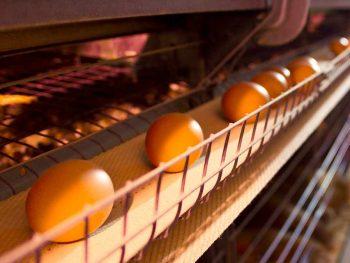 egg conveyor