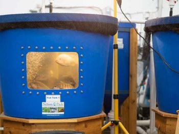 aquagrow aquaponics