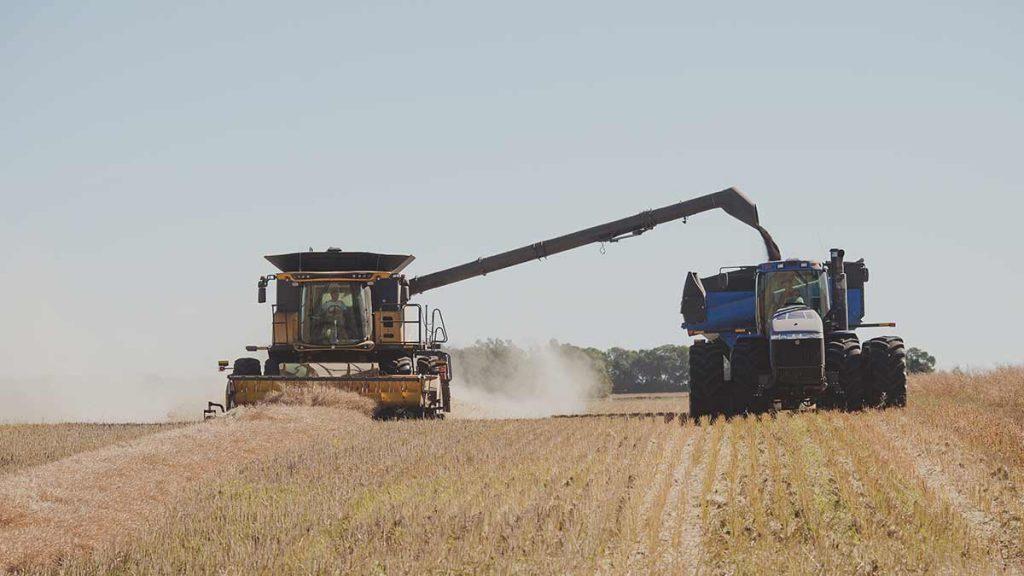 harvesting canola