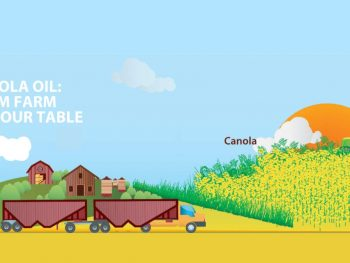 canola from farm to table